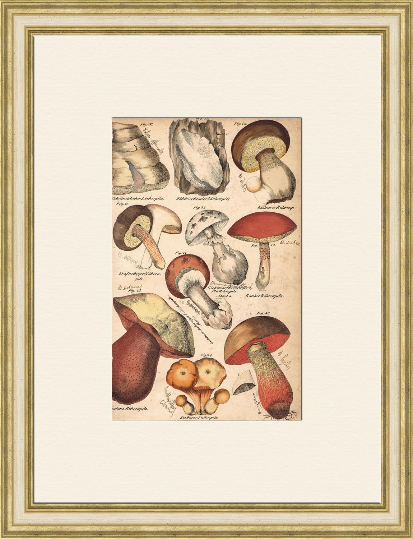 """Грибы: съедобные и """"ложные"""", редкая антикварная гравюра 19 ..."""